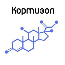 Кортизол — как связаны стресс и гормоны