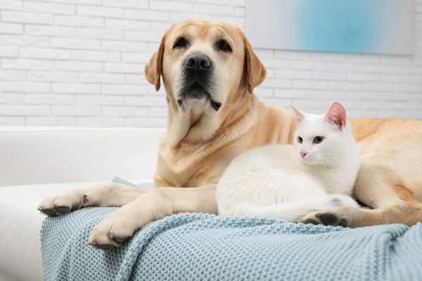 Tierhaarallergie - Allergie gegen Hunde und Katzen