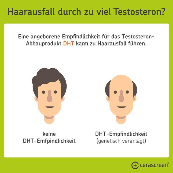 Kann zu viel Testosteron Haarausfall begünstigen?